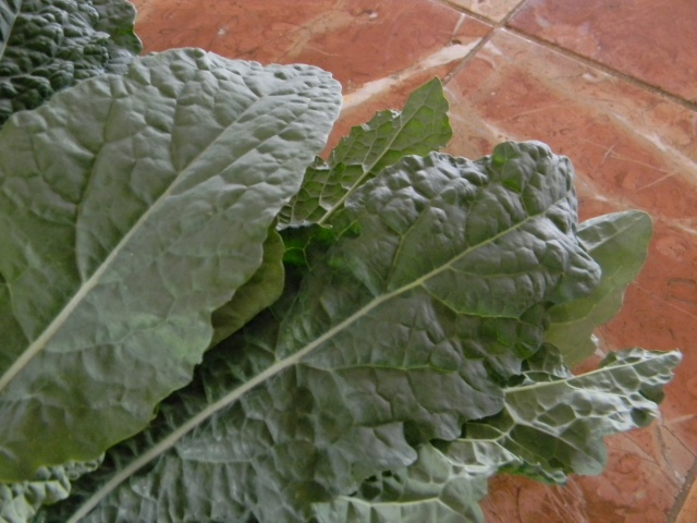 Gorgeous fresh tuscan kale